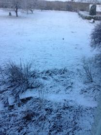 Snow 2 - 14012016 - SH