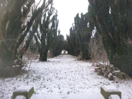 Snow - Yew Avenue - 17012016