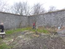 Lawn cuttings - around raspberries - 15032016