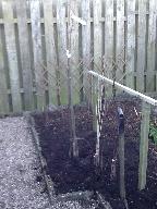 New trees - 07032016 - SH