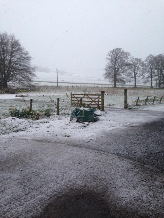 Snow 1 - 29042016 - TC