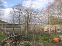 SWG - plum trees & chicken enclosure - 16042016