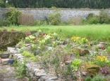 Alpine garden - 17052016