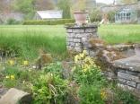 Alpine garden 2 - 17052016