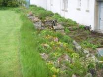 Alpine garden 2 - 29052016