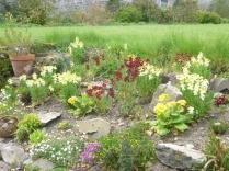 Alpine garden 3 - 17052016