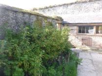 Currant bushes - SWG - 15052016