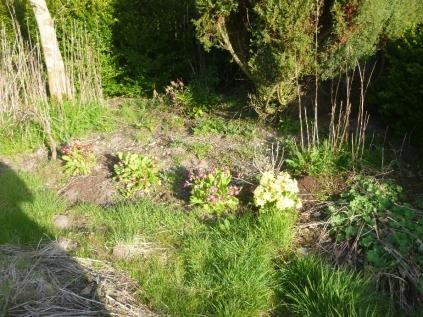 Flower garden - 08052016