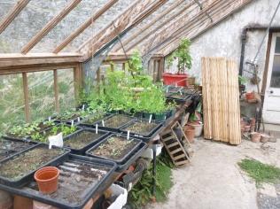 Glasshouse seedlings - 07052016