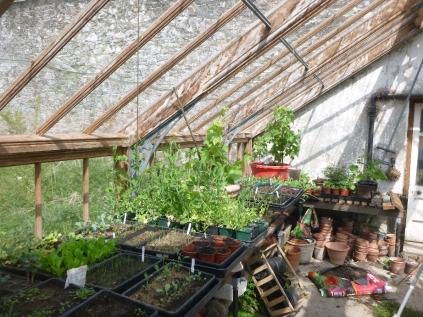 Glasshouse seedlings - 17052016