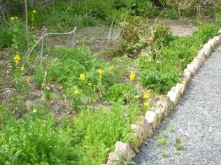 Herb border 1 - 17052016