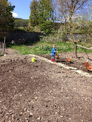 Planting spuds 1 - May 2016 - SH