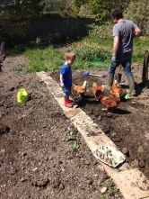 Planting spuds 2 - May 2016 - SH