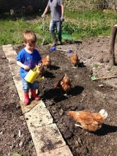 Planting spuds 3 - May 2016 - SH