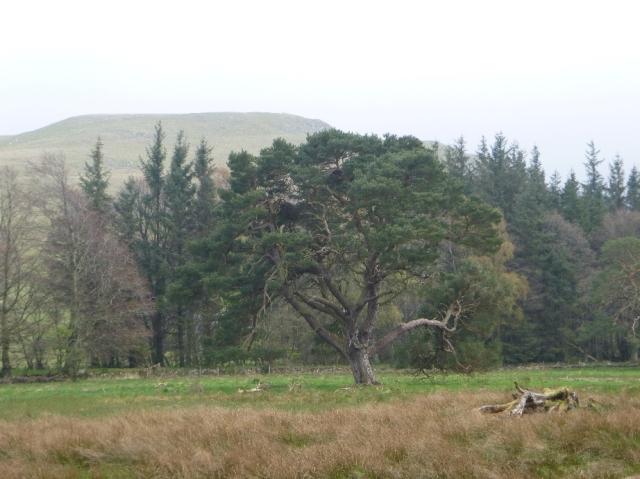 Specimen tree - 07052016