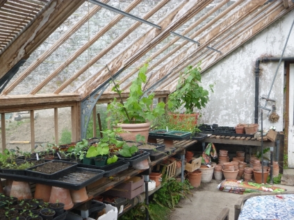 Vines & seedlings - 29052016