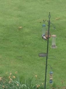 woodpecker - 20052016 - SH