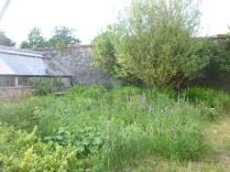 Flower garden - 18062016