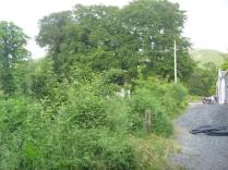 Hedge - 18062016
