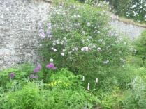 Herb border 1 - 10062016