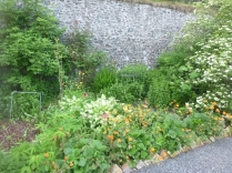 Herb border - 18062016