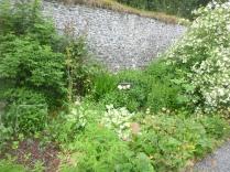 Herb border 2 - 25062016