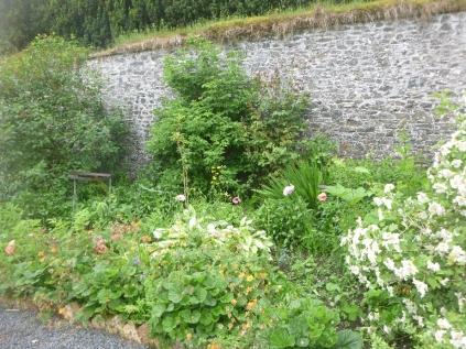 Herb border - 25062016