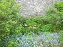 Herb border 3 - 10062016