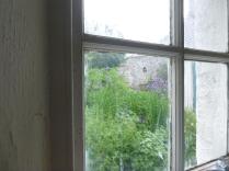 Iris through window 1 - 12062016