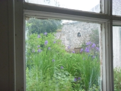 Iris through window2 - 12062016