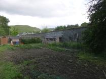 SWG veg patch 1 - 18062016