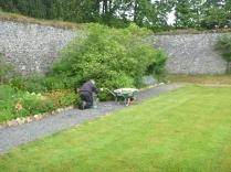 Weeding path - 11062016