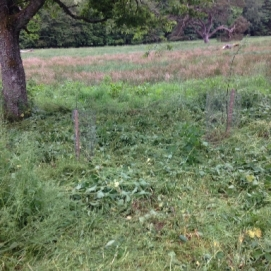 Willow trees cleared 1 - 15062016 - SH
