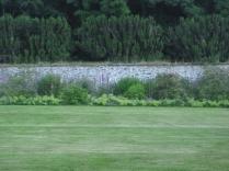 Back lawn mowed 3 - 13072016