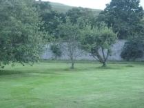 Back lawn mowed 4 - 13072016