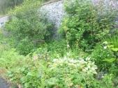 Herb border - 02072016