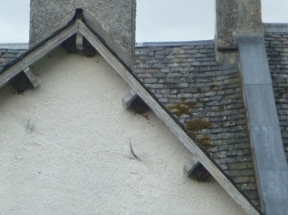 House martin nests 2 - 13072016