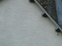 House martin nests 3 - 13072016