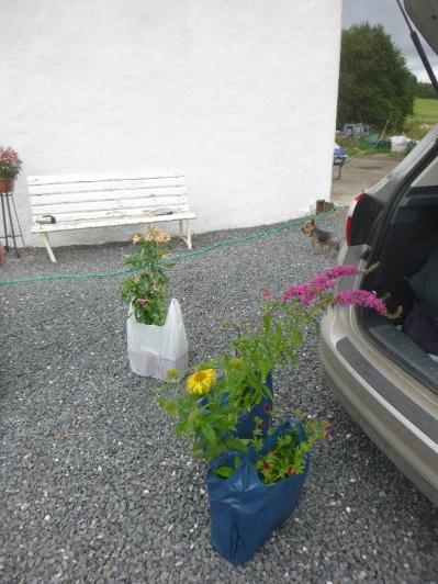 New plants - 21072016