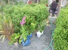 Plants by glasshouse - 24072016