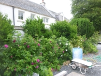 Rose garden - 09072016