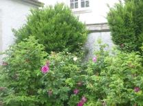 Rose garden 2 - 09072016