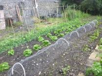 SWG - veggie patch - 02072016