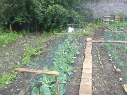 SWG - veggie patch 2 - 02072016