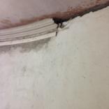 plastering-round-room-cornice-1-15082016-sh