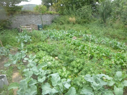 swg-veggie-patch-2-24092016