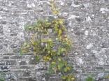 garden-apple-tree-2-31102016