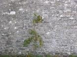 garden-apple-tree-31102016