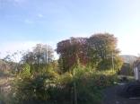 garden-autumn-trees-2-31102016