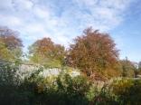garden-autumn-trees-31102016